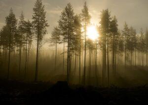 Tiur i skogen, fotokunst veggbilde / plakat av Tom Erik Smedal