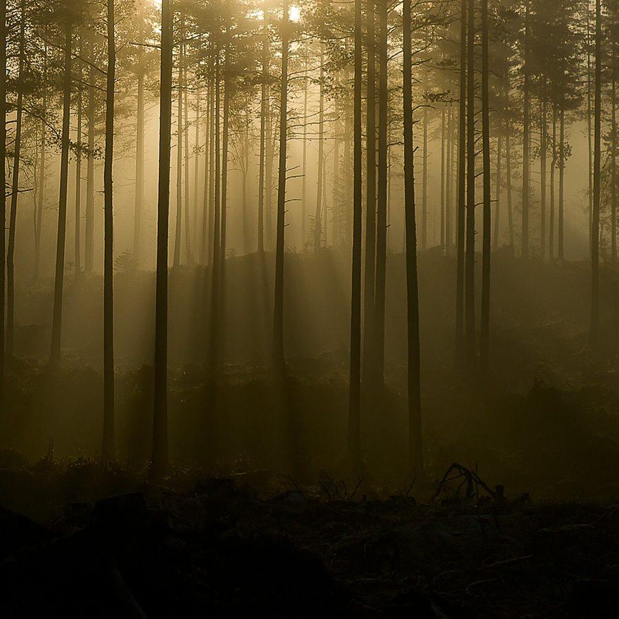 Trollsk skog av Bård Basberg