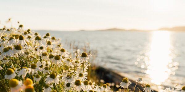 Blomster i skjærgården, fotokunst veggbilde / plakat av Bård Basberg