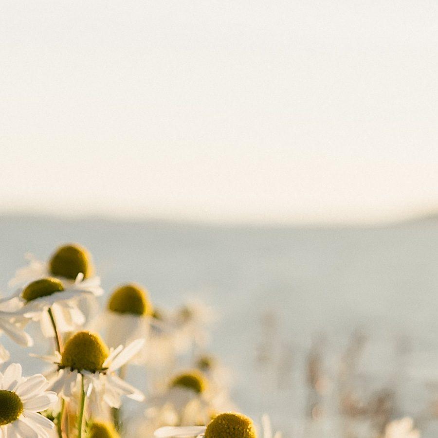 Blomster i skjærgården av Bård Basberg