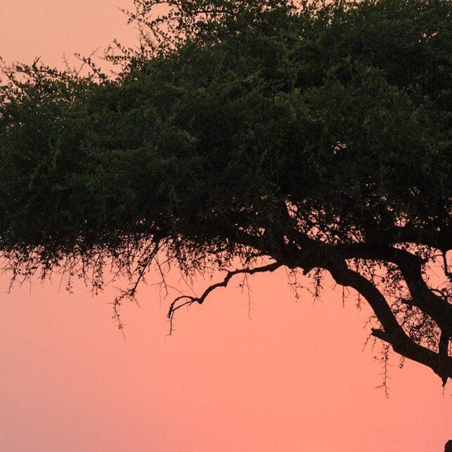Solnedgang på savannen, fotokunst veggbilde / plakat av Erling Maartmann-Moe