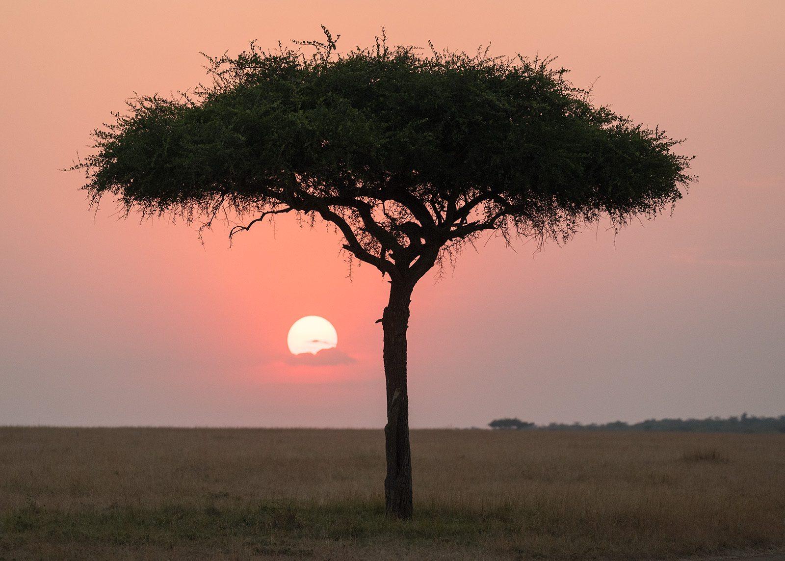 Solnedgang på savannen av Erling Maartmann-Moe