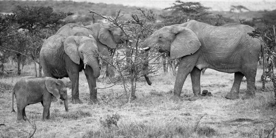 Elefantfamilie på savannen av Erling Maartmann-Moe