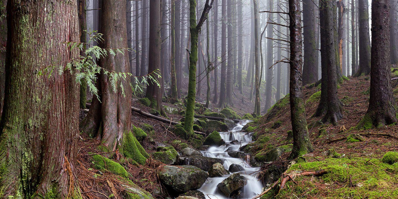 Elv i Skogen av Eirik Sørstrømmen