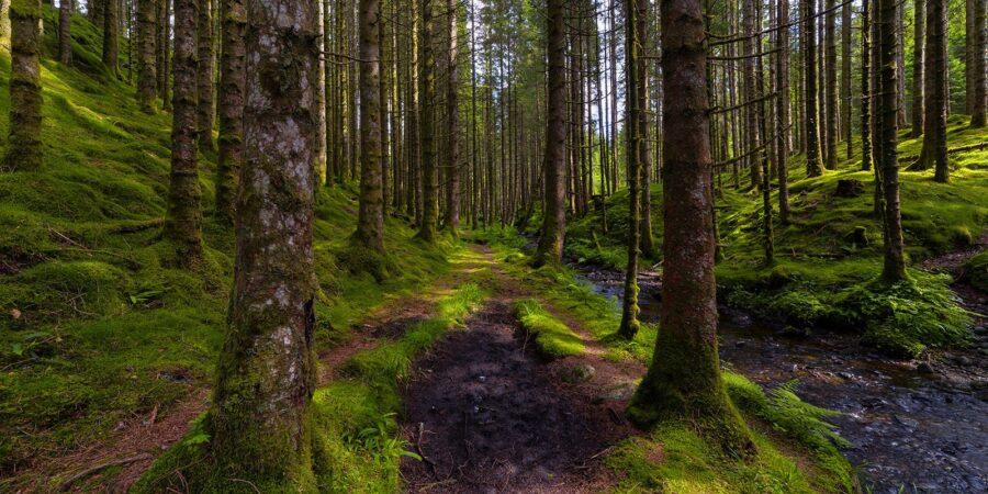 Stien i Skogen av Eirik Sørstrømmen