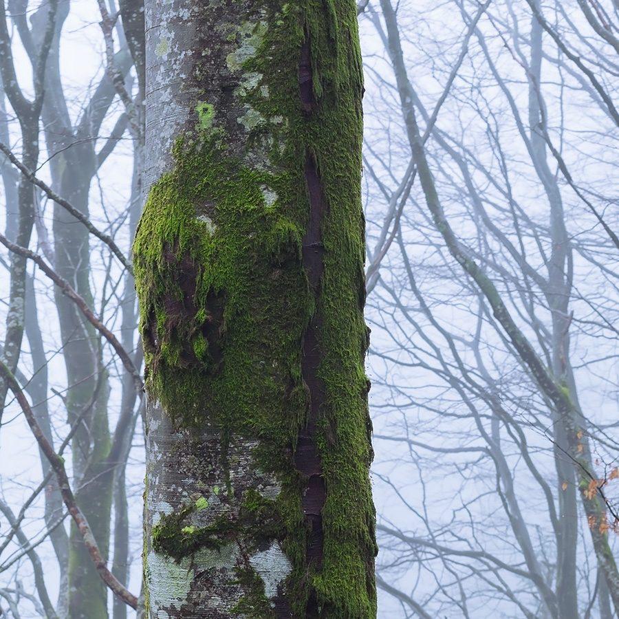 Tåke i Bøkeskogen av Eirik Sørstrømmen