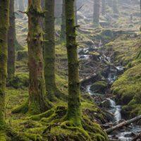 Tåke i Skogen av Eirik Sørstrømmen