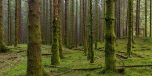 Foss i skogen, fotokunst veggbilde / plakat av Eirik Sørstrømmen