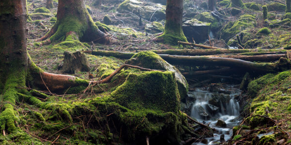En bekk i skogen., fotokunst veggbilde / plakat av Eirik Sørstrømmen