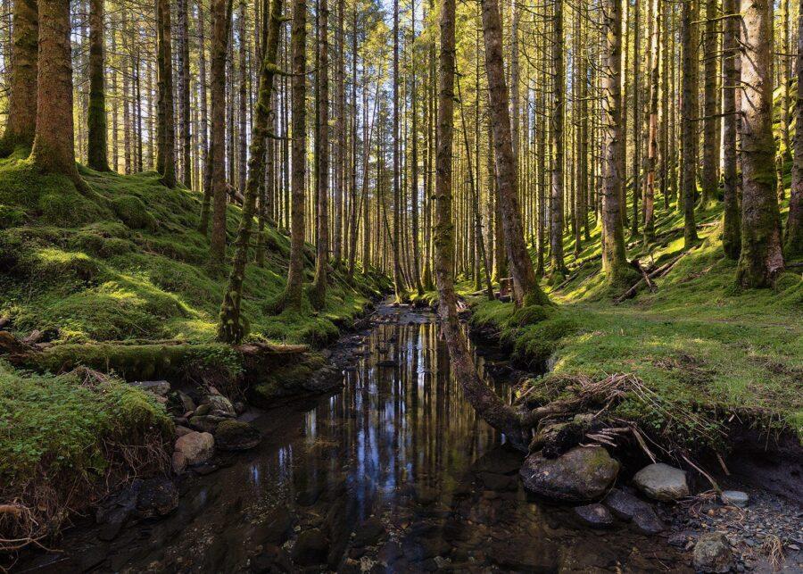 Vår i Skogen av Eirik Sørstrømmen