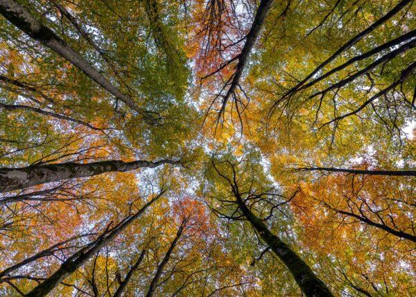 Se Opp For Høsten, fotokunst veggbilde / plakat av Eirik Sørstrømmen