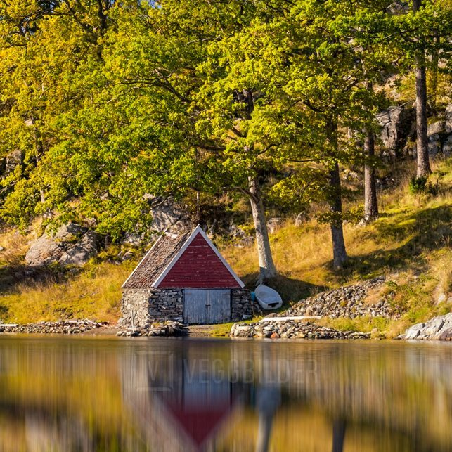 Trær som speiler seg i vannet ved kysten., fotokunst veggbilde / plakat av Eirik Sørstrømmen