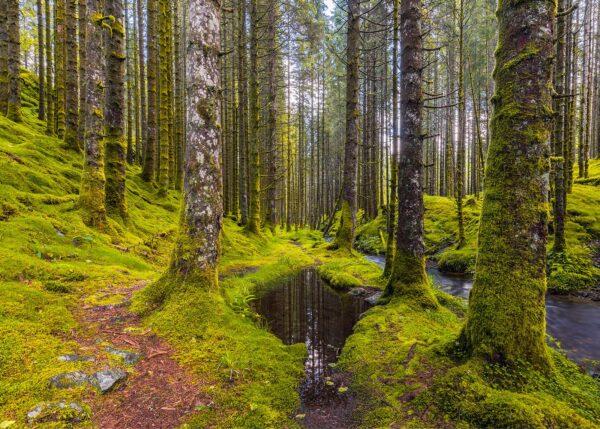 Stien i Granskogen, fotokunst veggbilde / plakat av Eirik Sørstrømmen