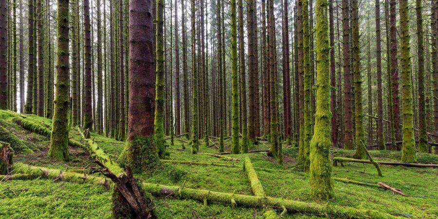 Mosebelagt Skog av Eirik Sørstrømmen