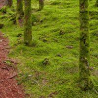 En sti en den mosebelagte skogen., fotokunst veggbilde / plakat av Eirik Sørstrømmen