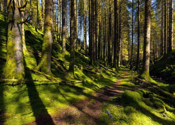 Stien i Skogen II, fotokunst veggbilde / plakat av Eirik Sørstrømmen