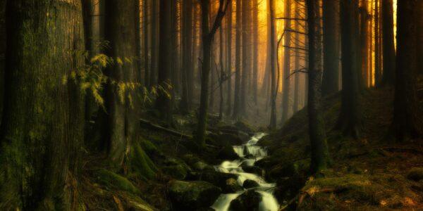Stemningsfullt i skogen, fotokunst veggbilde / plakat av Eirik Sørstrømmen