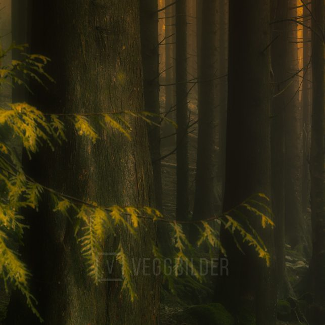 Den Mystiske Skogen, fotokunst veggbilde / plakat av Eirik Sørstrømmen