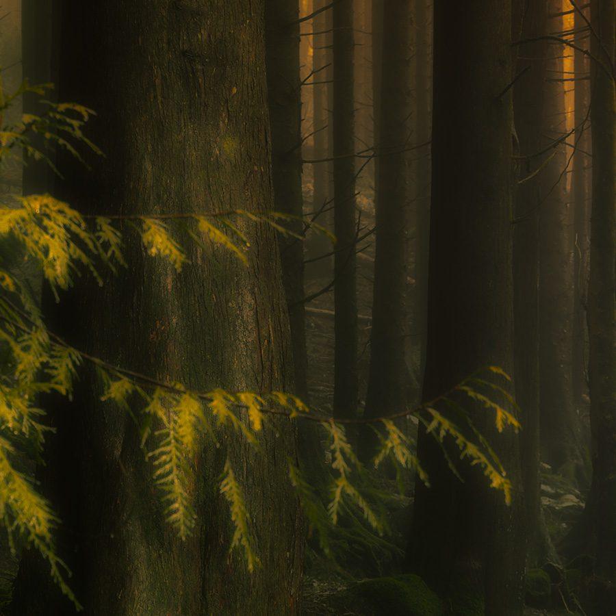 Den Mystiske Skogen av Eirik Sørstrømmen