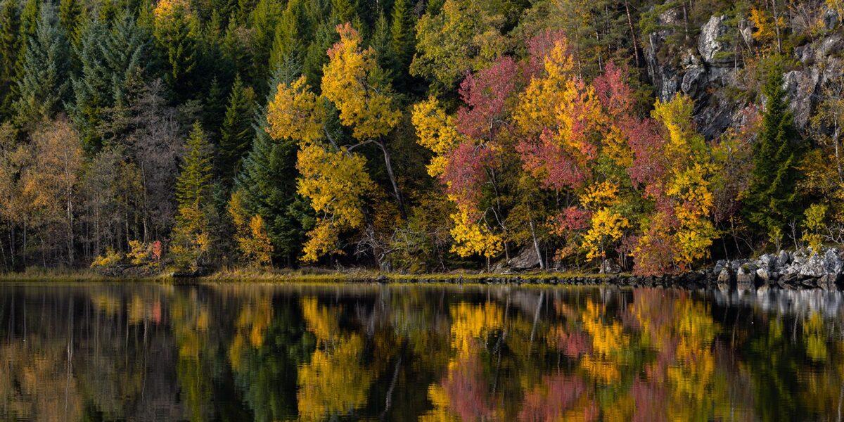 Høstfarger som speiles i innsjøen., fotokunst veggbilde / plakat av Eirik Sørstrømmen