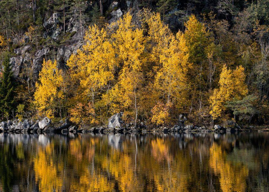 Høstfarger ved Innsjøen II av Eirik Sørstrømmen