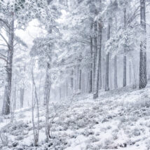 Holmenkollen. Både bakken og turistene forsvinner i vintertåka som lå tykt denne dagen i februar., fotokunst veggbilde / plakat av Marit Bye Gjermshus