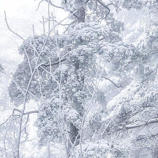Kvadratisk format - Hvit frossen skog - Grefsenkollen, Oslo, fotokunst veggbilde / plakat av Gunnar Kopperud
