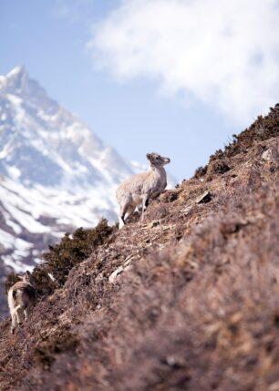 Nepal, fotokunst veggbilde / plakat av Henning Mella