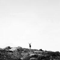 Enslig reinsdyr, fotokunst veggbilde / plakat av Henning Mella