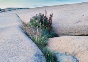 Hubro på et svaberg en sen sommernatt, fotokunst veggbilde / plakat av Kjell Erik Moseid