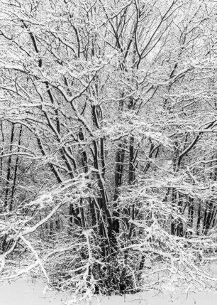 Snødekte trær, fotokunst veggbilde / plakat av Kåre Johansen