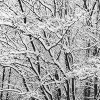Snødekte trær av Kåre Johansen