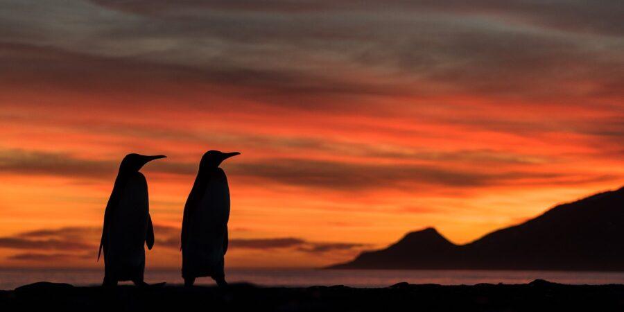 Morgen på St.Andrews Bay av Kåre Johansen