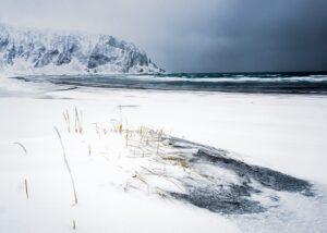Lundefugl i snøstorm, fotokunst veggbilde / plakat av Terje Kolaas