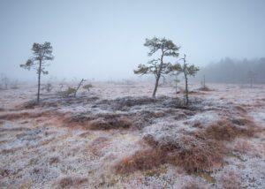 Myrull, fotokunst veggbilde / plakat av Kjell Erik Reinhardtsen