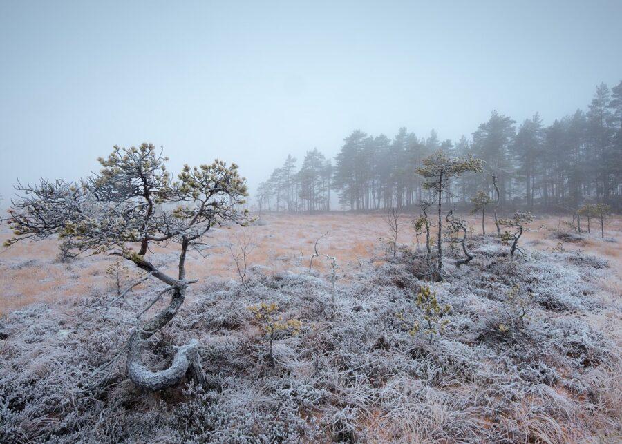 Rimfrost på myra av Kåre Johansen