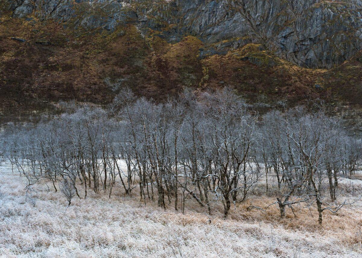Vinteren kommer av Kåre Johansen