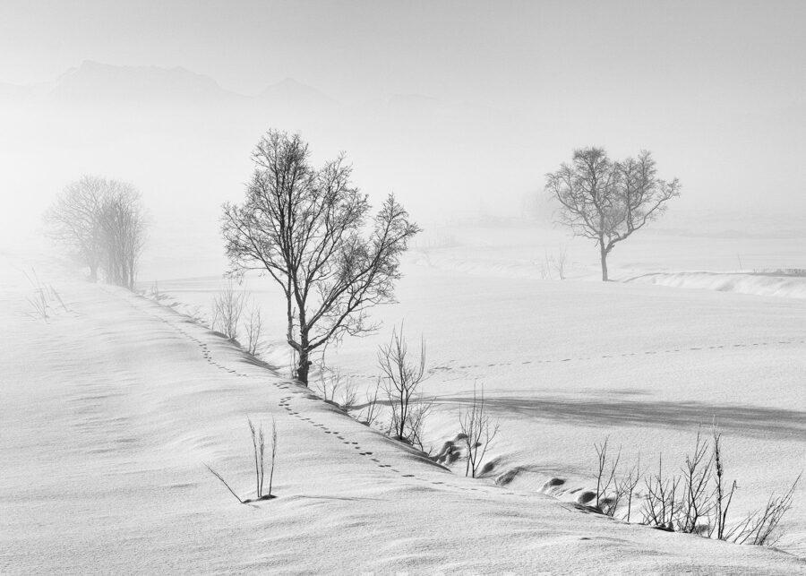 Frostrøyk ved Eidsfjorden av Kåre Johansen