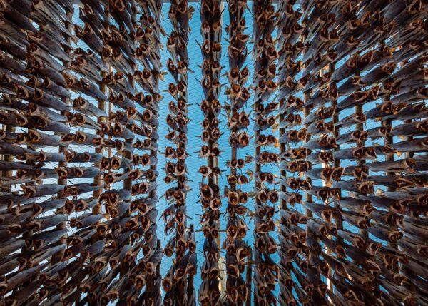 Snart tørrfisk., fotokunst veggbilde / plakat av Kåre Johansen