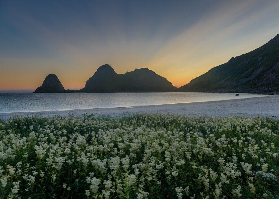 Sommerblomster i Sandviksbukta av Kåre Johansen