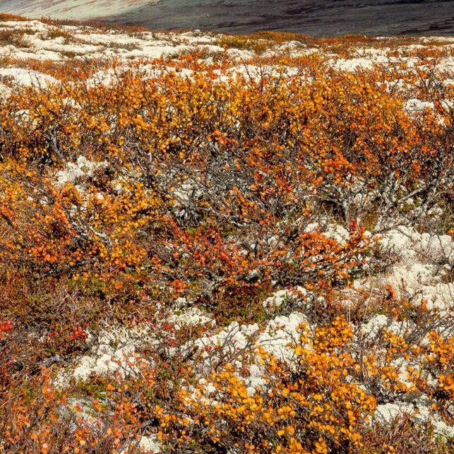 Høst i fjellet II, fotokunst veggbilde / plakat av Kåre Johansen