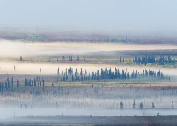 Skodda stiger opp over myrlandskapet en tidlig høstmorgen, fotokunst veggbilde / plakat av Kjell Erik Moseid