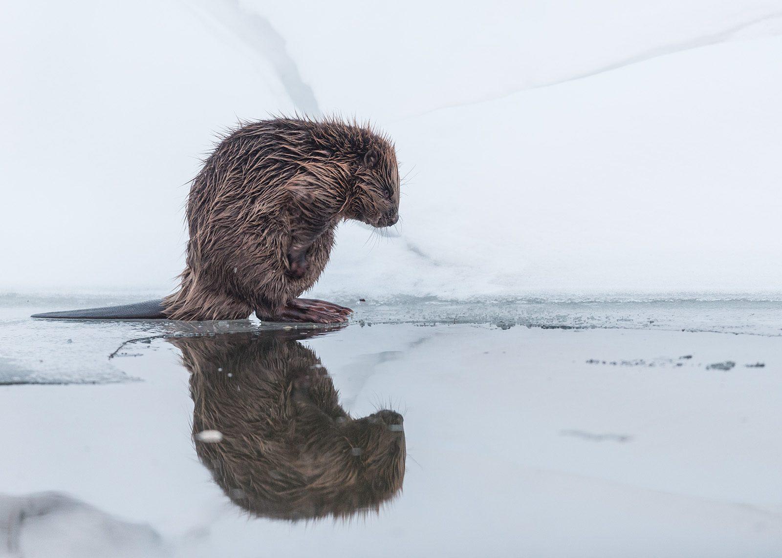 Morgenvask på iskanten av Kjell Erik Moseid