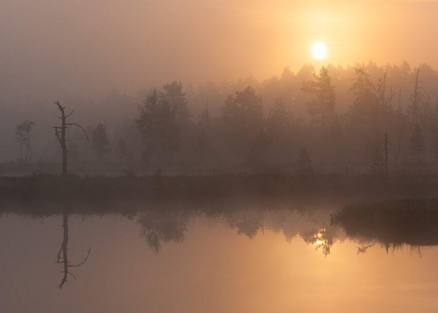 Morgenstemning over skogstjern av Kjell Erik Moseid