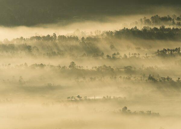 Morgenskodde med soltriper over skogåsene, fotokunst veggbilde / plakat av Kjell Erik Moseid