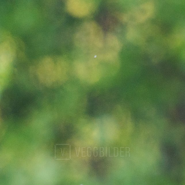 Revesøsken ser på hverandre med prøvende blikk, fotokunst veggbilde / plakat av Kjell Erik Moseid