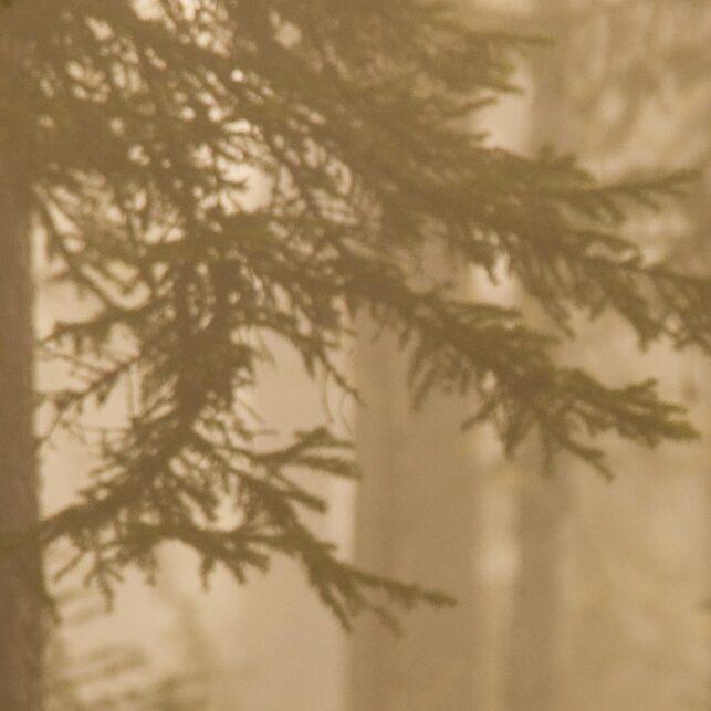 En bjørn kommer gående i morgenskodde, fotokunst veggbilde / plakat av Kjell Erik Moseid