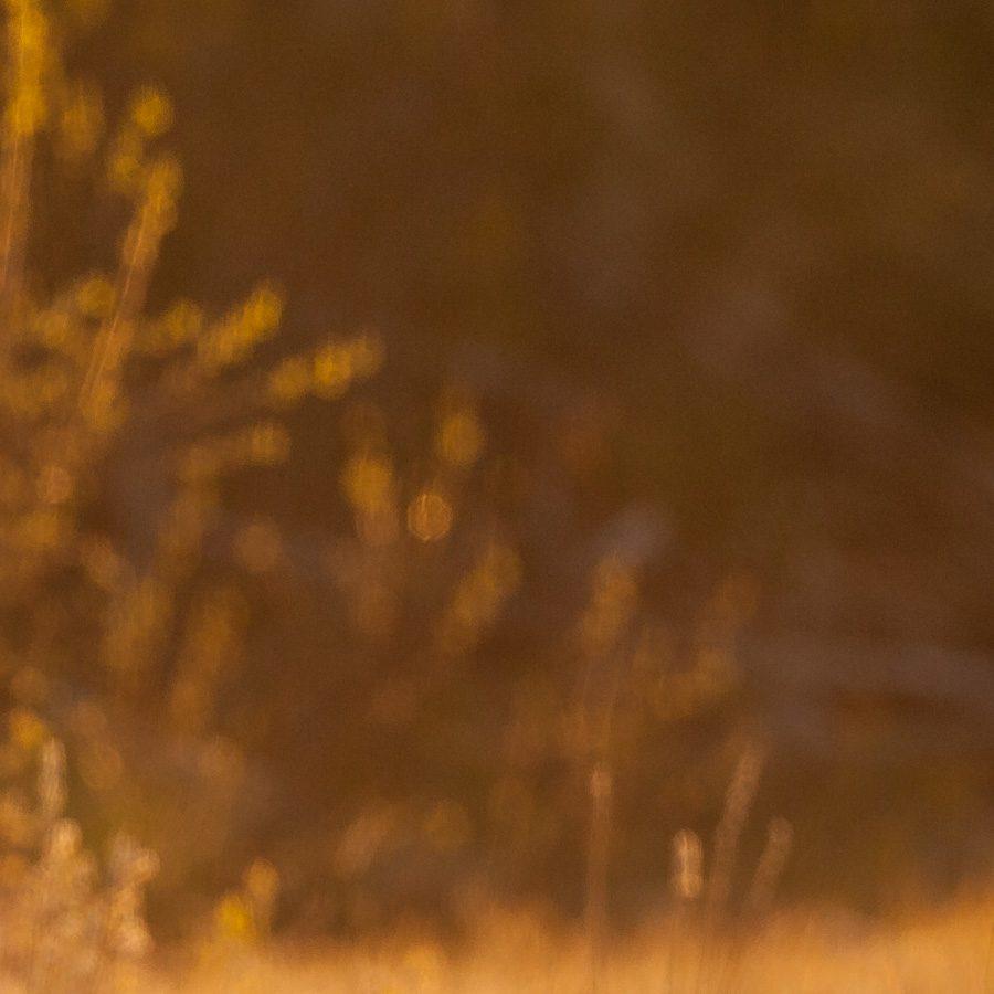 Hegre i soloppgang av Kjell Erik Moseid