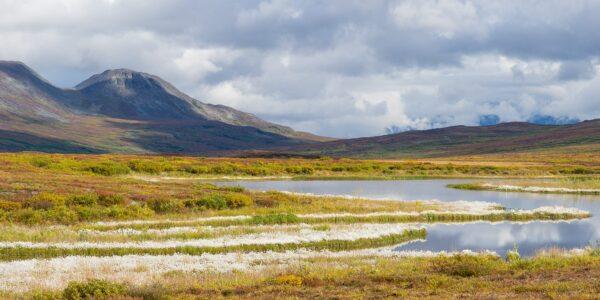 Tidlighøst i Denali, fotokunst veggbilde / plakat av Kjell Erik Moseid