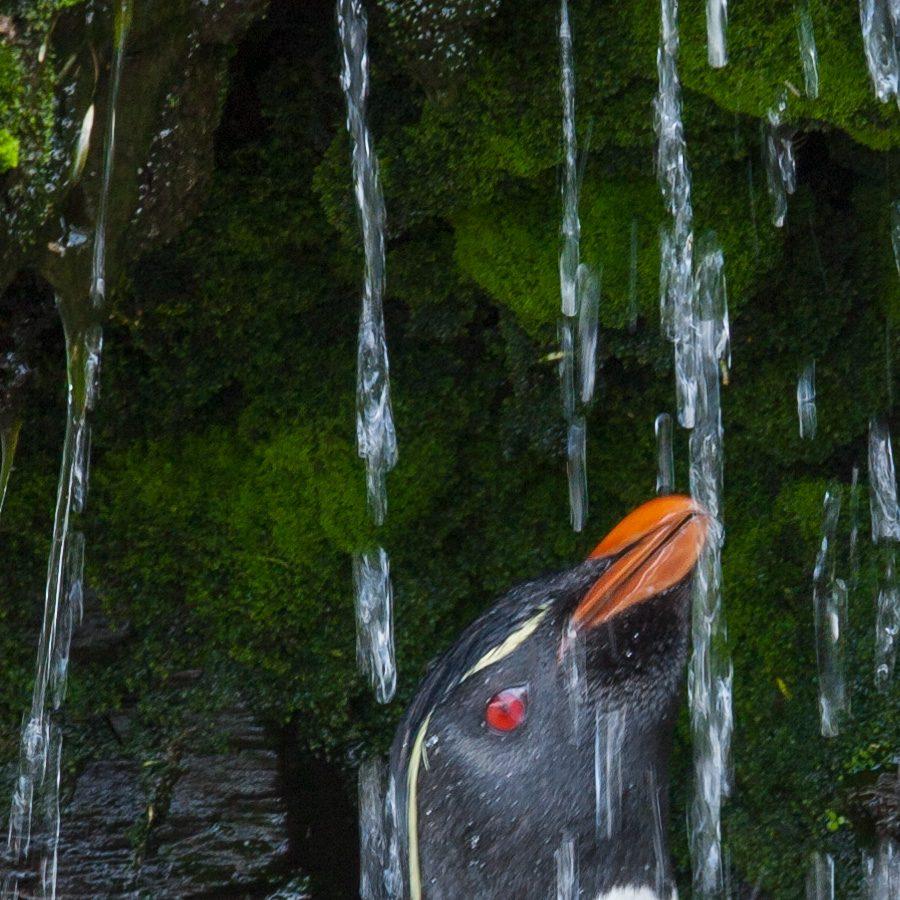 Pingvin som dusjer av Kjell Erik Moseid